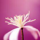 Think Pink by Nicole Bertrand