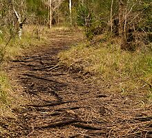 A Path Well Worn by Lianne Wooster