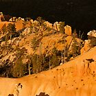 Golden Angels Of Bryce Canyon by Gregory J Summers