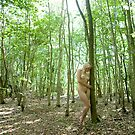 Nude in the forest by Robert Ellis