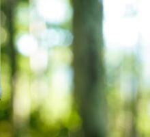Aspen Tree Blur Sticker