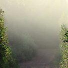Morning Mist by Don Rankin