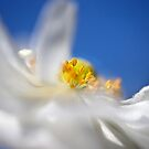 Ethereal anemone by Celeste Mookherjee