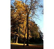 Shadows in a Golden Autumn Photographic Print