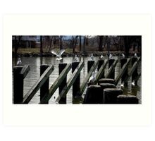 Seagulls - Scenes from the Hudson River Art Print