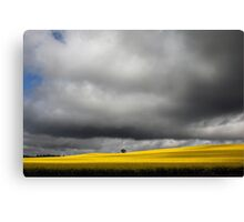 Storm Clouds over Canola Fields SA Canvas Print