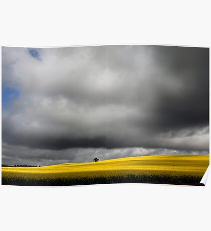Storm Clouds over Canola Fields SA Poster