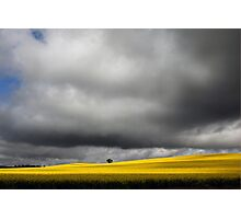 Storm Clouds over Canola Fields SA Photographic Print