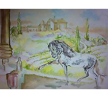 Tuscan Horse Cafe Photographic Print