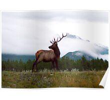 Bull Elk II - Jasper National Park, Canada Poster