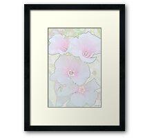 Lavatera Blossoms  Framed Print