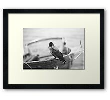 Cheeky Bird Framed Print