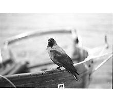 Cheeky Bird Photographic Print