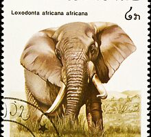 African elephant stamp. by FER737NG