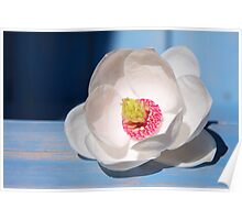 Fantasia - Oyama Magnolia Poster