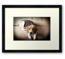 Don't be fooled by my cuteness !! Framed Print