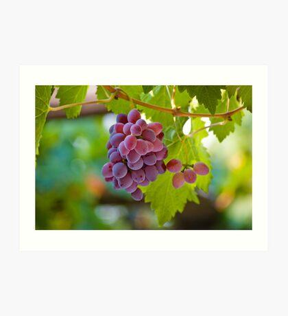 Red Grape Art Print