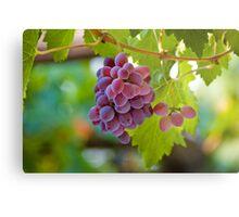 Red Grape Metal Print