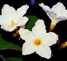 Floral stars by ♥⊱ B. Randi Bailey