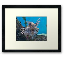 Fish in a Tank Framed Print