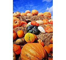 Colorful pumpkins  Photographic Print