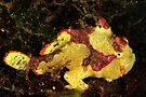 Clown Frogfish by MattTworkowski