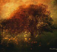 Toward a secret sky ... by Chris Armytage™