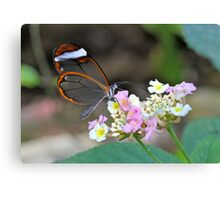 Glasswing on Flower Canvas Print