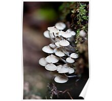 Coopers Creek Shrooms Poster