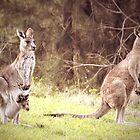 The Kangaroo Family by yolanda