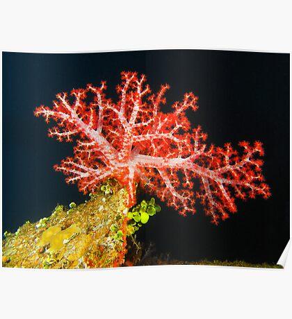 Coral on the Fujikawa Maru Poster