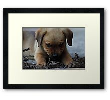 Don't mess with me . . . Framed Print