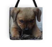 Don't mess with me . . . Tote Bag