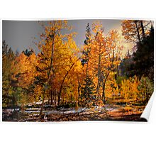 Where The Gold Is ~ Aspen Trees ~ Poster