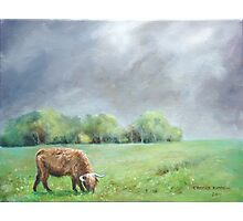 Big hairy cow (what storm??) Photographic Print