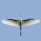 Egret Flyover by Jim Cumming