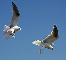 Juvenile Hunting by byronbackyard
