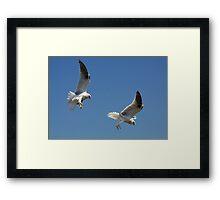 Juvenile Hunting Framed Print