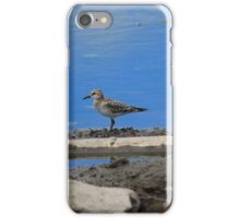 Pectoral Sandpiper on Sand iPhone Case/Skin