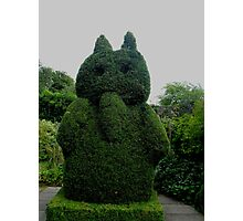 Topiary At Greenbank Gardens, Glasgow Photographic Print