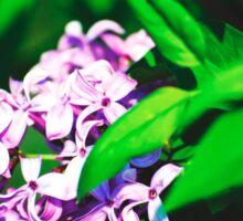 Purple Bush Flower Sticker