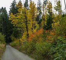 In The Fall Colors by Charles & Patricia   Harkins ~ Picture Oregon