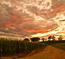 Sunset Corn - Corn Field in Peagreen, Colorado by Susan Humphrey
