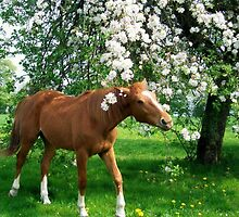 under the apple-tree.. by karina73020