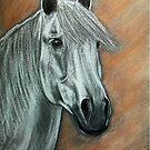 Horse's portrait... by karina73020