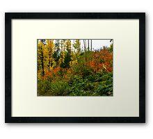 Oregon Fall Colors Framed Print