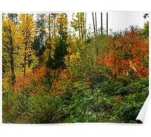 Oregon Fall Colors Poster