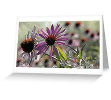 Coneflower - Photo Finish Greeting Card