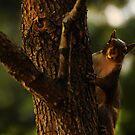 Peek  a boo by lynell