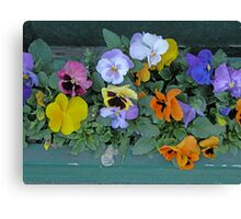 Flower box Canvas Print